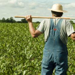 Disoccupazione Agricola e Assegni al Nucleo Familiare Rimini Patronato e CAF UNSIC